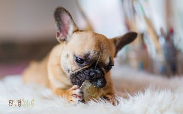best food for French bulldog with skin allergies Featured Image
