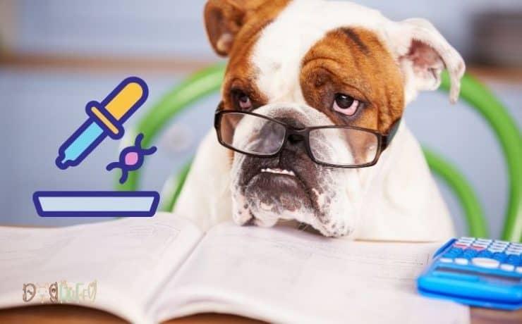 bulldog DNA test