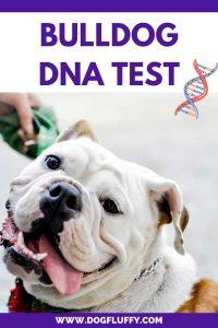 bulldog dna test pinterest