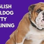 English Bulldog Potty Training Regression: 6 Basic Causes