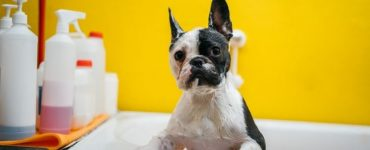 flea shampoo for puppies under 12 weeks