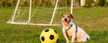 games for dogs app Featured Image