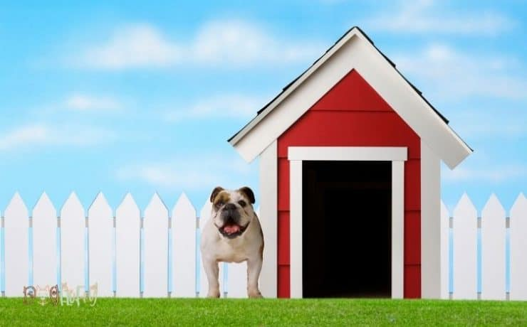 insulated dog house for 2 large dogs