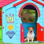 20 Most Expensive Luxury Dog House