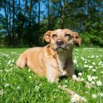 natural dog sunscreen Featured Image
