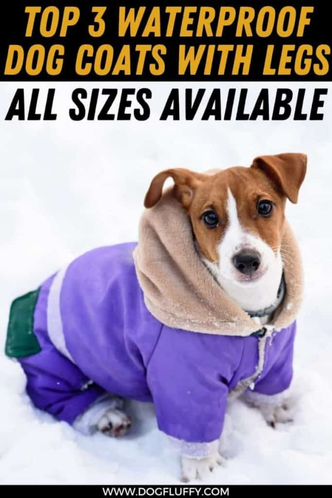 waterproof dog coat with underbelly PIn image
