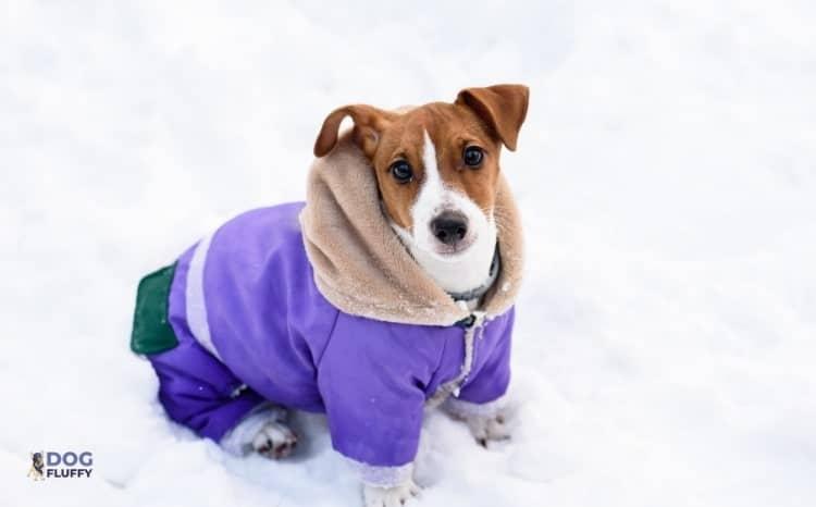 Waterproof Dog Coat with Underbelly