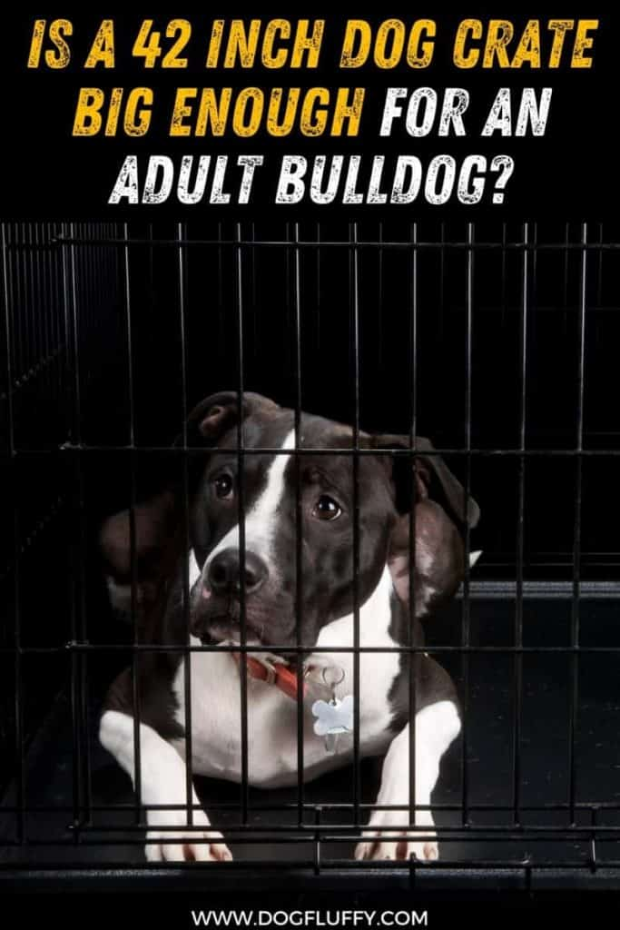 Is a 42 Inch Dog Crate Big Enough for an Adult Bulldog pin image