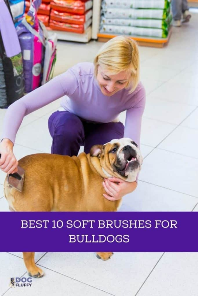 The Best 10 Soft Brushes For Bulldogs