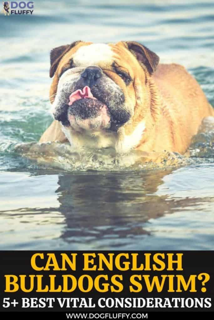 Can English Bulldogs Swim? 5+ Best Vital Considerations pin image