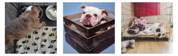 Is 42 Inch Dog Create Ideal for My Bulldog