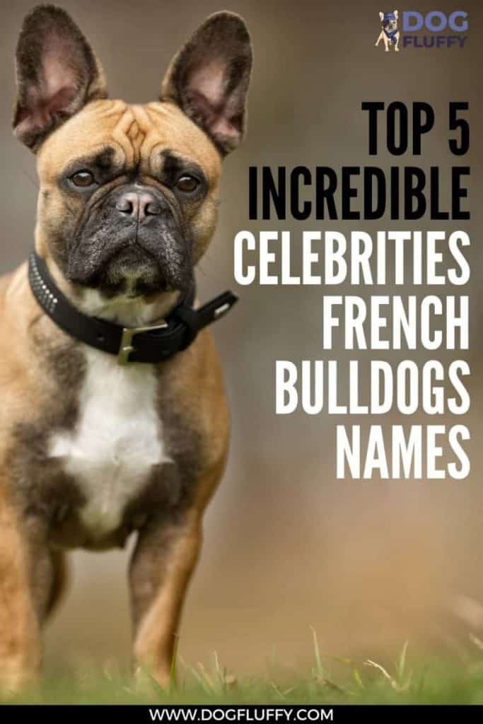 Top 5 Incredible Celebrities French Bulldogs Names PIN IMAGE