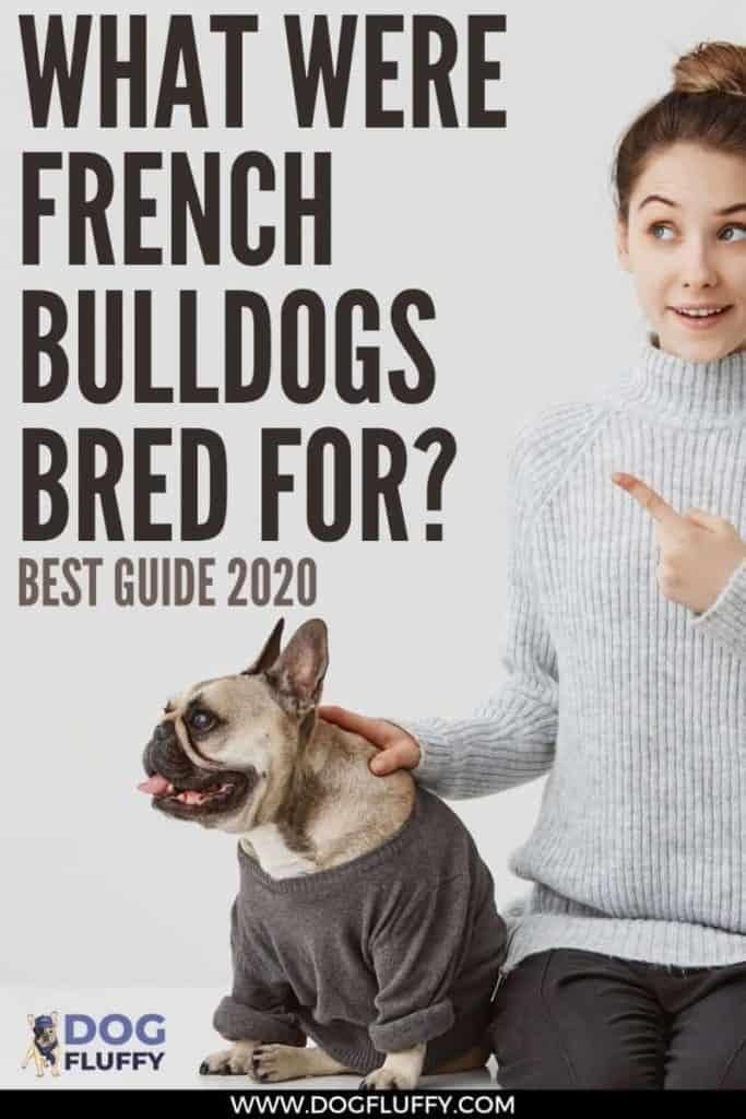 What Were French Bulldogs Bred For Best Guide 2020 pin image