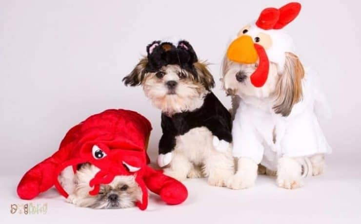 Adorable Costumes for Your Dog Featured Image