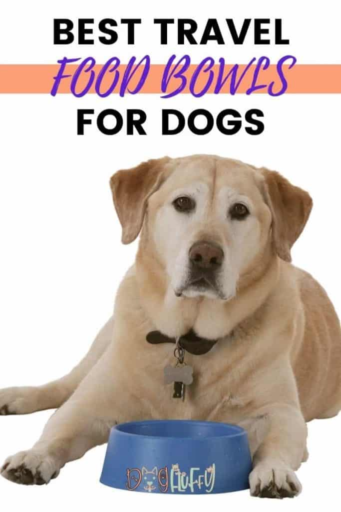 Best Travel Food Bowls For Dogs PIn Image