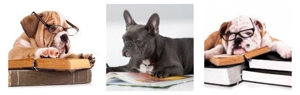 Bulldog Books Internal image