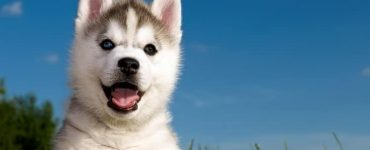 Choose the Perfect Dog Name Featured Image