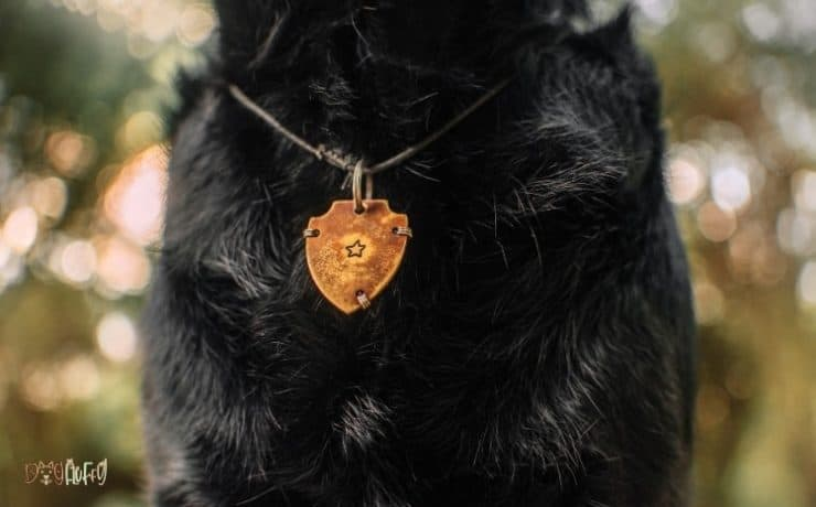 Cute ID Tags For Dogs Featured Image