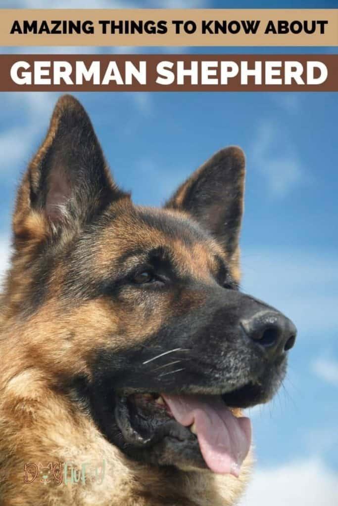 German Shepherd Dog Pin Image