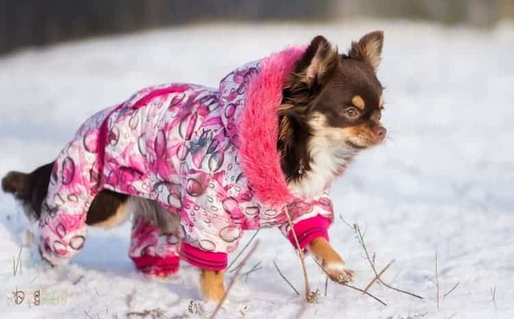 How To Choose The Perfect Waterproof Dog Coats With Legs