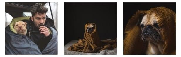 Keeping a Dog House Warm internal image