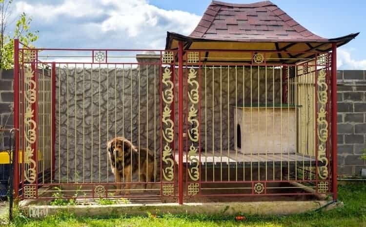 Metal Insulated Dog House Featured Image