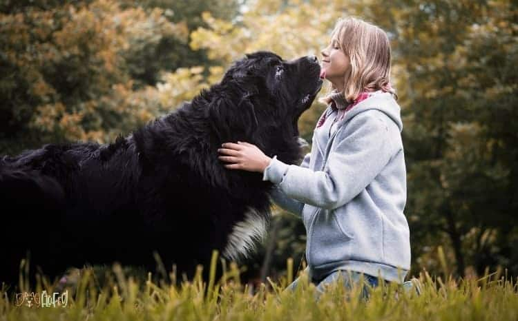 Newfoundland Fluffy Dog Breed