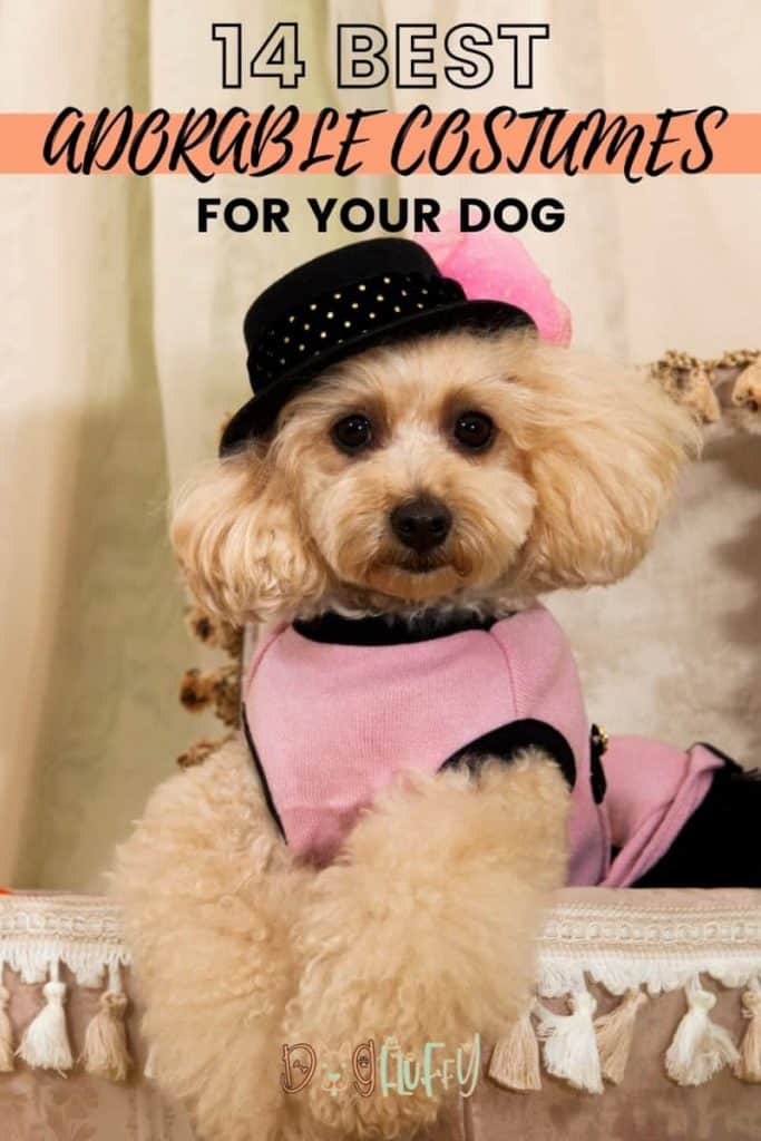14 Best Adorable Costumes for Your Dog PIN IMAGE