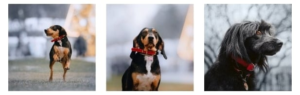 Reasons Your Dog Needs a Pet ID Tag Internal image