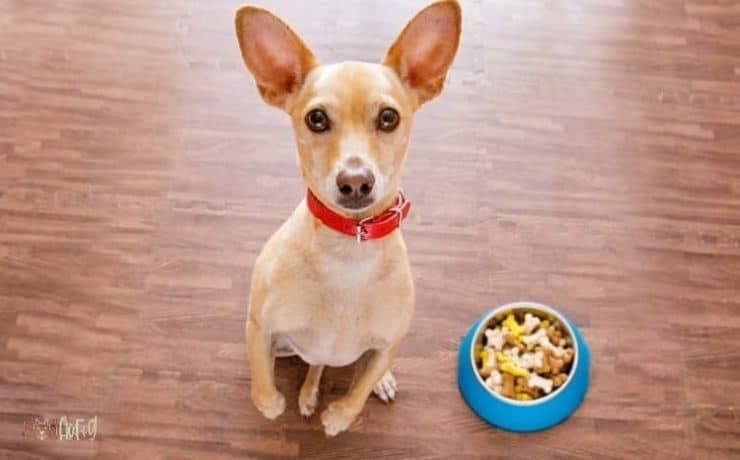 Travel Food Bowls For Dogs Featured Image