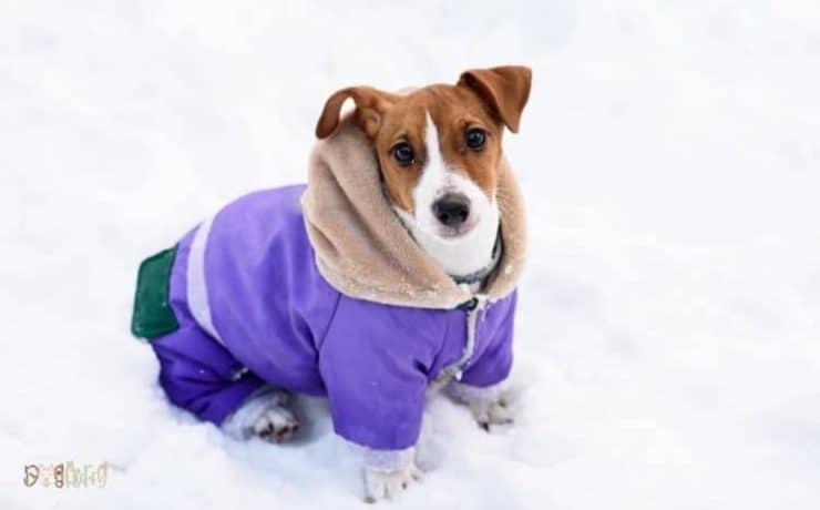 Waterproof Dog Coats With Legs Featured image