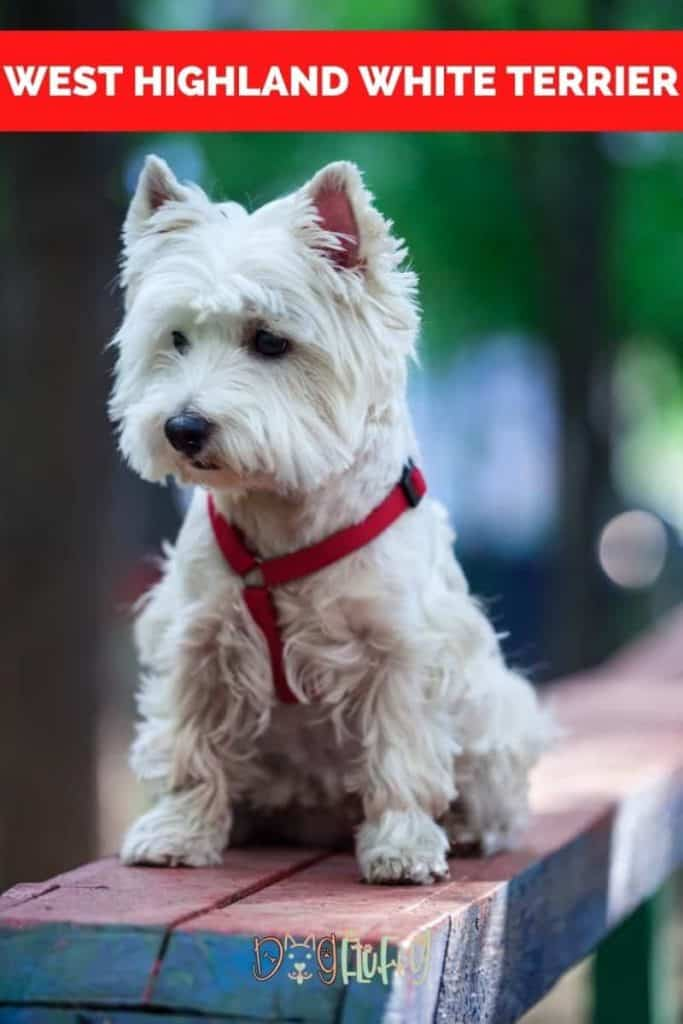 West Highland White Terrier Pin Image