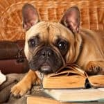 11 Best Selling Bulldog Books and Care Guides