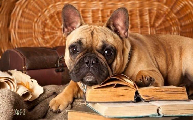bulldog books featured image