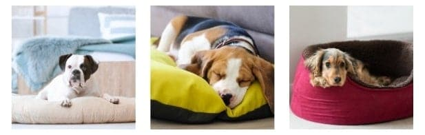 dog bed Internal image