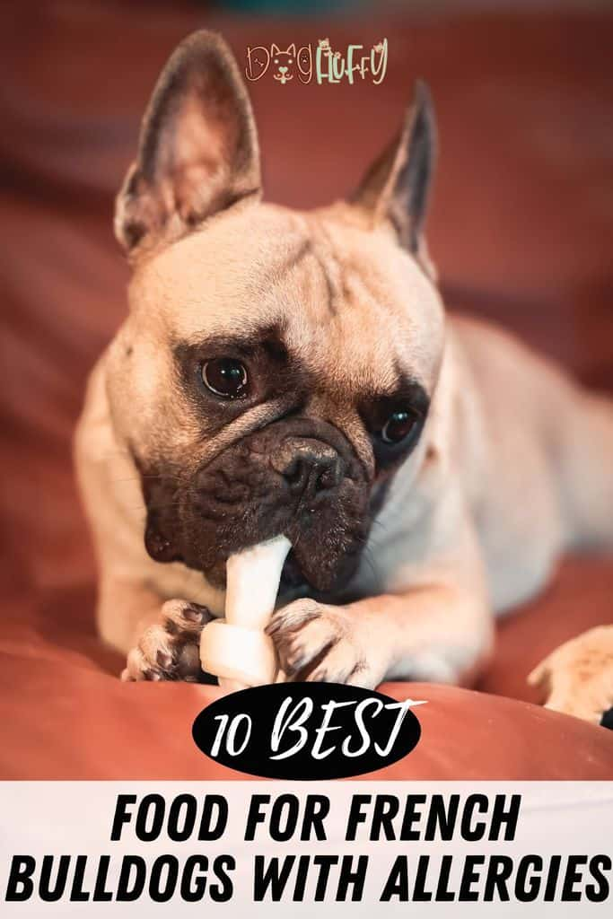 10-Best-Food-For-French-Bulldogs-With-Allergies-Pin-Image