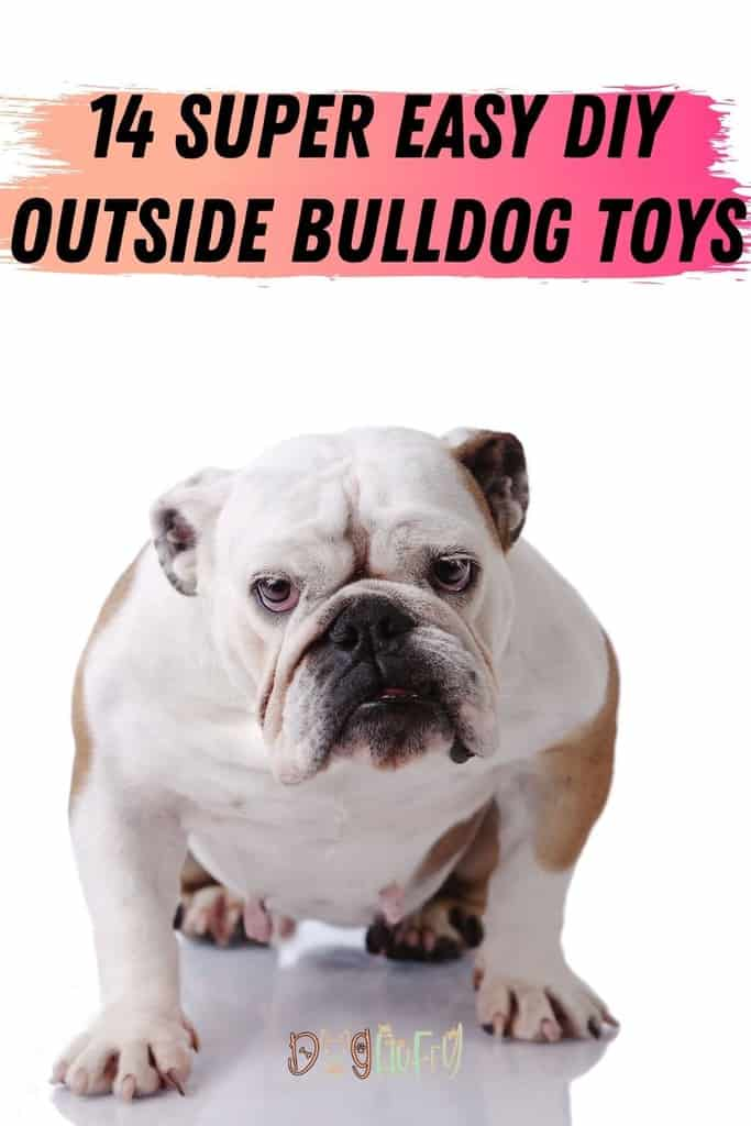 14-Super-Easy-DIY-Outside-Bulldog-Toys-Pin-Image