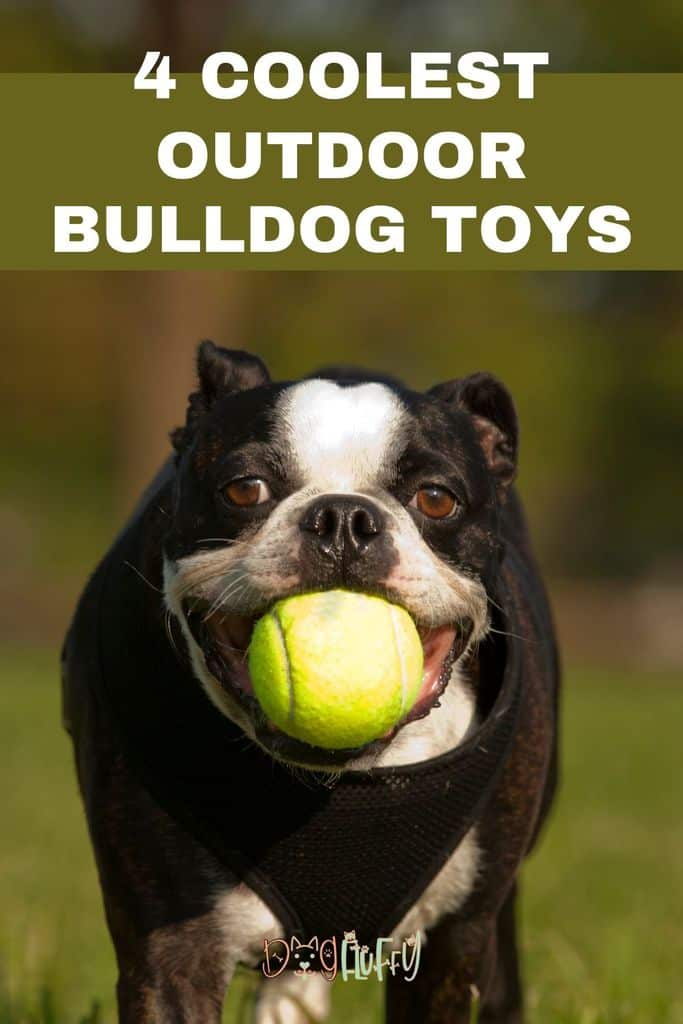 4-Coolest-Outdoor-Bulldog-Toys-Pin-Image