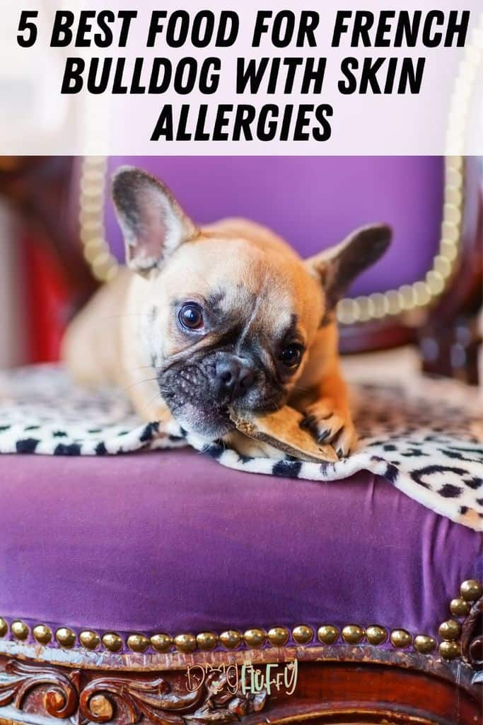 5-Best-Food-For-French-Bulldog-With-Skin-Allergies-Pin-Image
