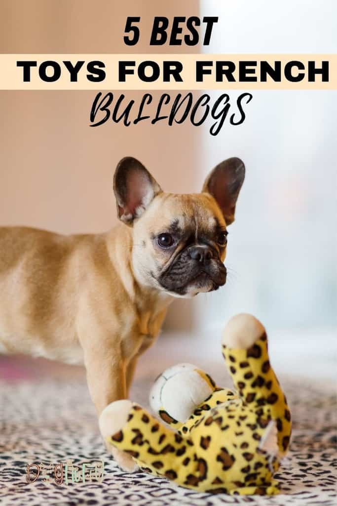 5-Best-Toys-for-French-Bulldogs-Pin-Image
