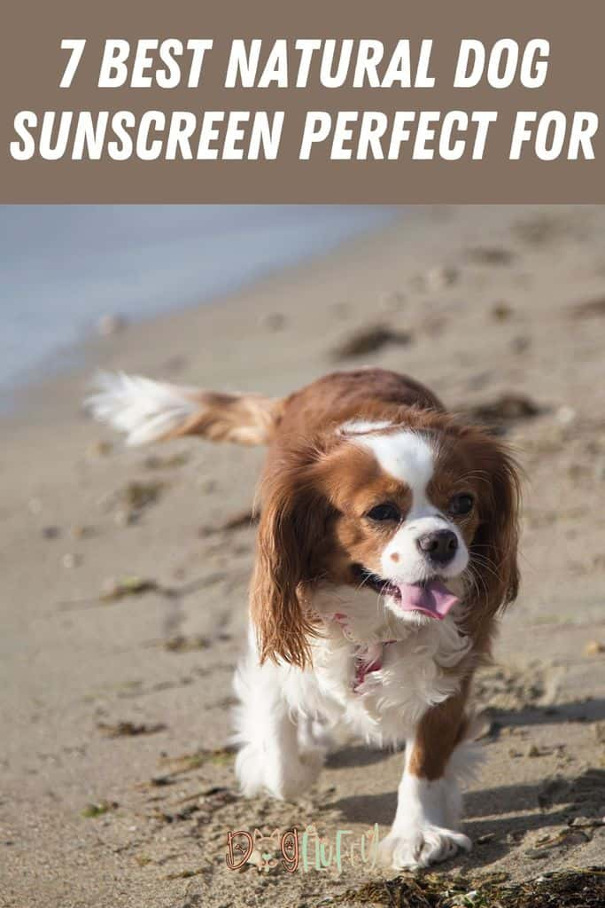 7-Best-Natural-Dog-Sunscreen-Perfect-for-Pin-Image