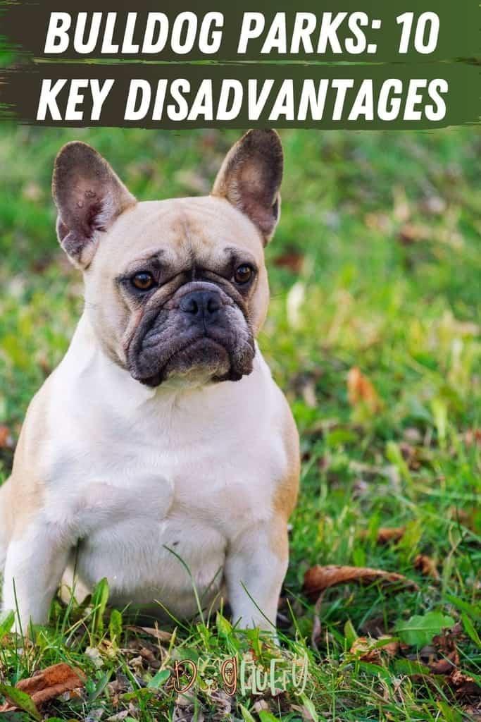 Bulldog-Parks_-10-Key-Disadvantages-Pin-Image