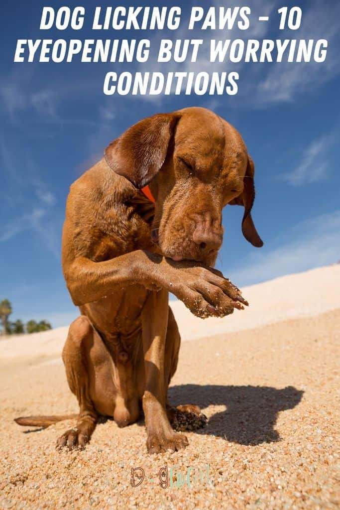 Dog-Licking-Paws-10-Eye-Opening-But-Worrying-Conditions-Pin-Image