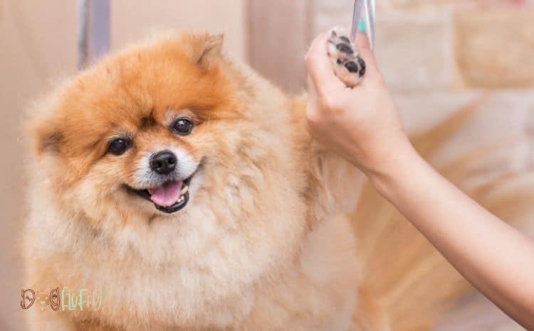 Dog-Nail-Bleeding-After-Walk-