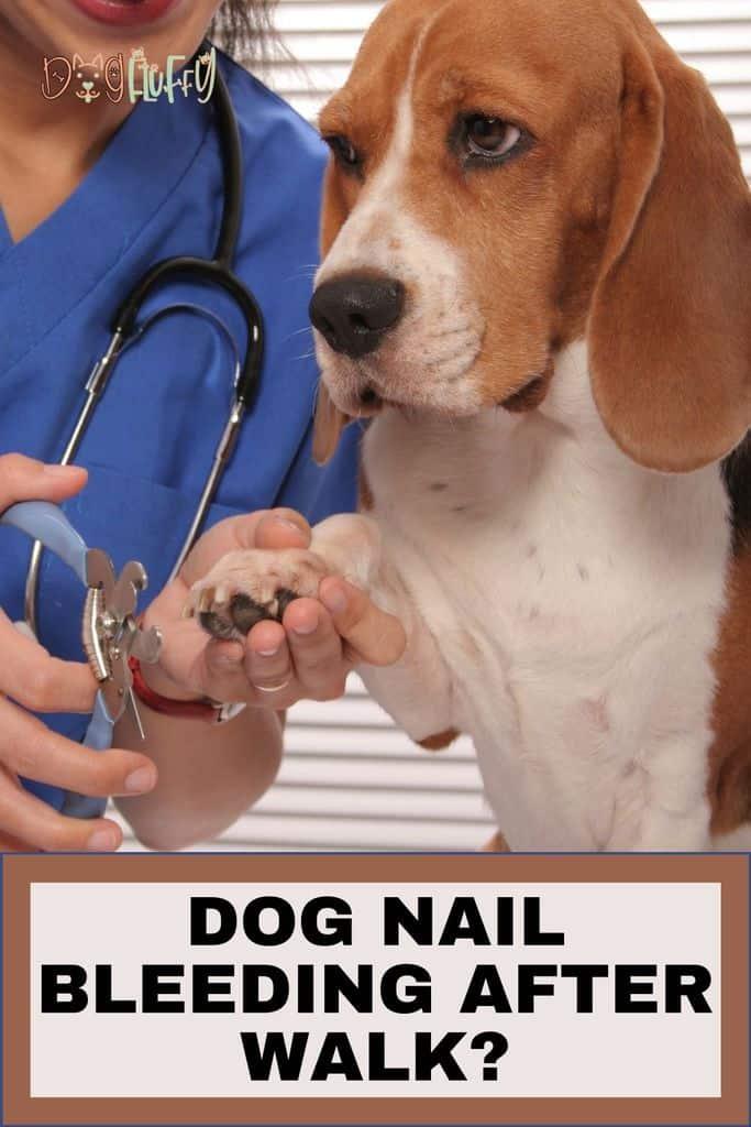 Dog-Nail-Bleeding-After-Walk_-Pin-Image