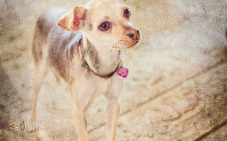 ECO-FRIENDLY-DOG-COLLARS-featured-image-