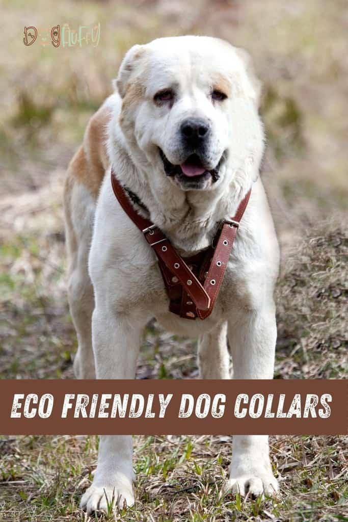 ECO-FRIENDLY-DOG-COLLARS-pin-image