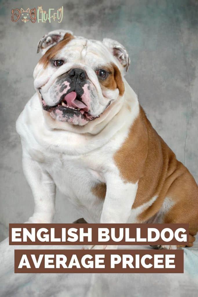 English-Bulldog-Average-Price-pin-image