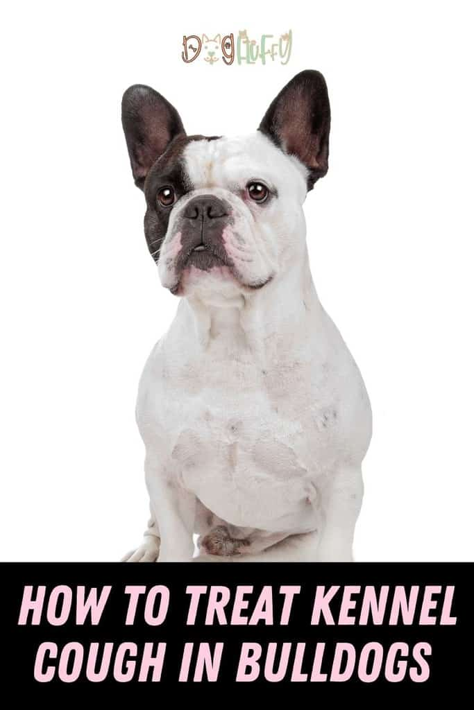 How-To-Treat-Kennel-Cough-In-Bulldogs-Pin-Image