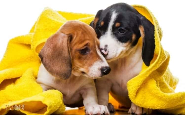 Microfiber Dog Towels - Care Tips